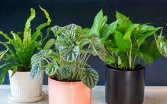 plants Plants To Decorate Your Coffee Table According To Your Zodiac Sign home plants 240x150
